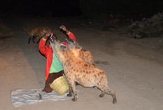 Harar - hyenas