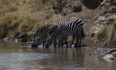 Safari (12 of 13).jpg