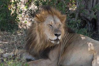 Safari (10 of 13).jpg