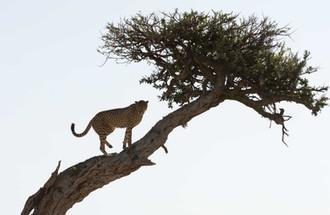 Safari (8 of 13).jpg