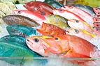 沖縄の鮮魚.jpg