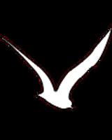ציפור