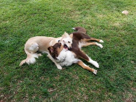 כלבים ונחשים