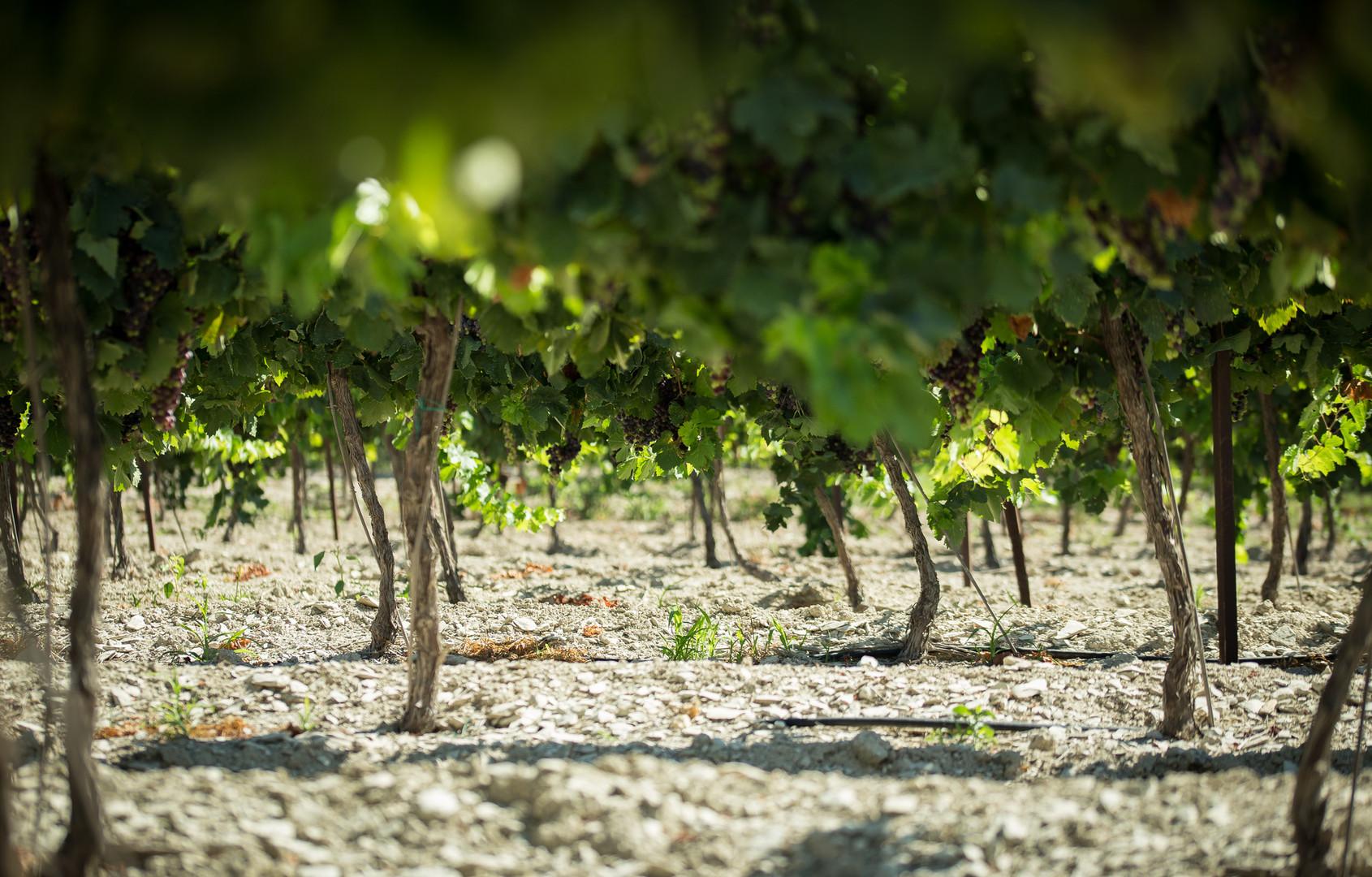 שוק חקלאים   עץ השדה   גבעת עדה