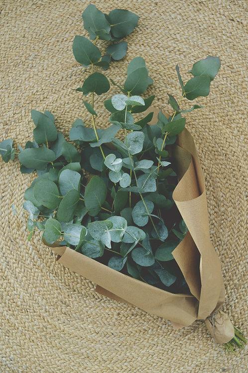 Eucaliptus Bunch