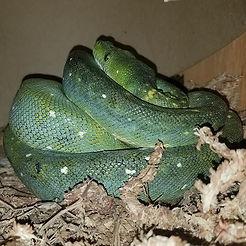 She is always in her nest box hopefully