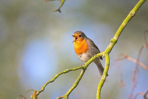 small-bird-2224946_960_720.jpg