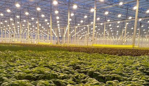 Agrotechnology.jpg