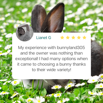 Bunnyland305 Review by Lionet G