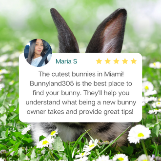 Bunnyland305 Review by  Maria S
