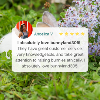 Bunnyland305 Review by Angelica V