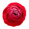 Flowers%20(2)_edited.png