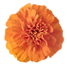 Flowers%20(1)_edited.png