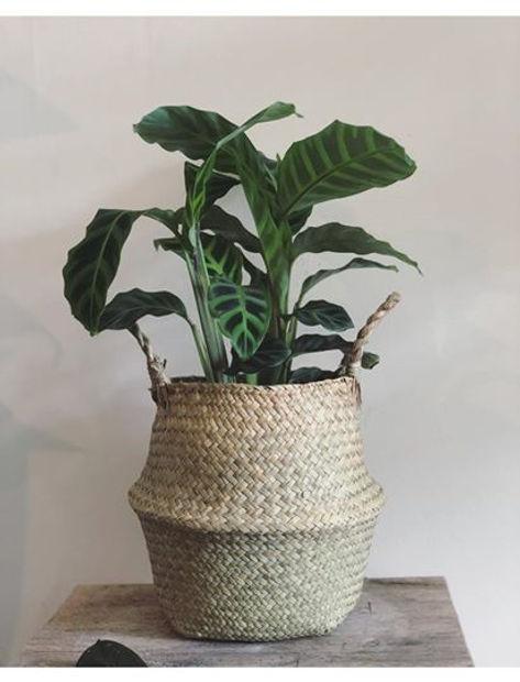 pop wilder plant.jpg
