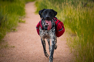 Hickory Grove Pictures Marketing, Sport Dog, RuffWear