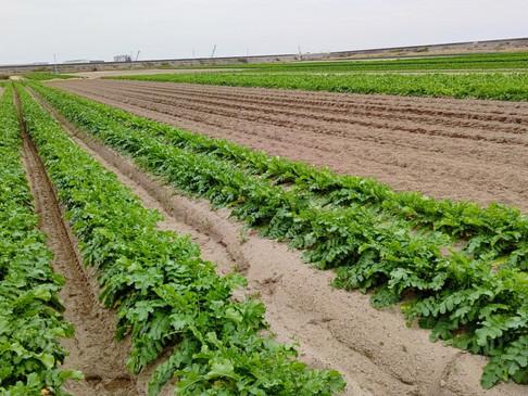 農業「夢咲案内人」