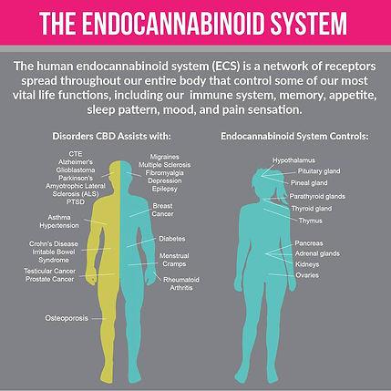 Endocannabinoid-System-Infographic.jpg