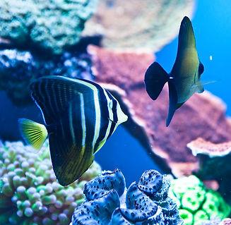 fish (2).JPG