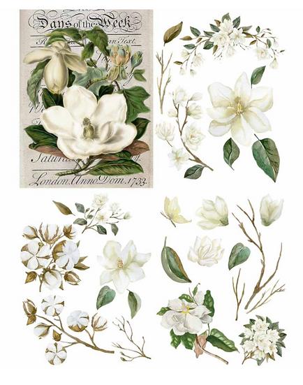 'Magnolia Garden' Belles and Whistles Transfer
