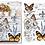 Thumbnail: Papillon Transfer