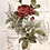 Thumbnail: Redesign Decor Transfers-Botanical Rose