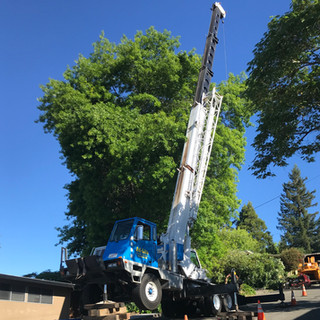 Tree Removal in Hard to Reach Areas