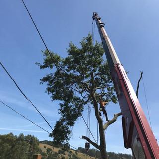 Tree Removal Ad-Lite Crane Service 24 Hour Crane Services