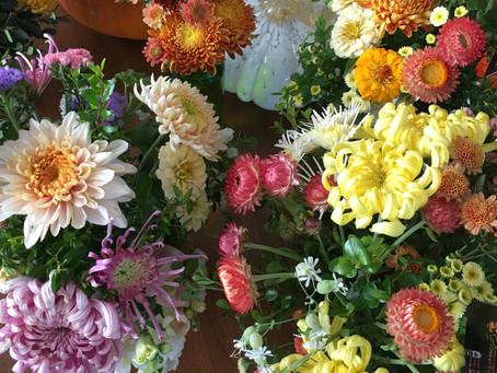 No More Boring Chrysanthemums