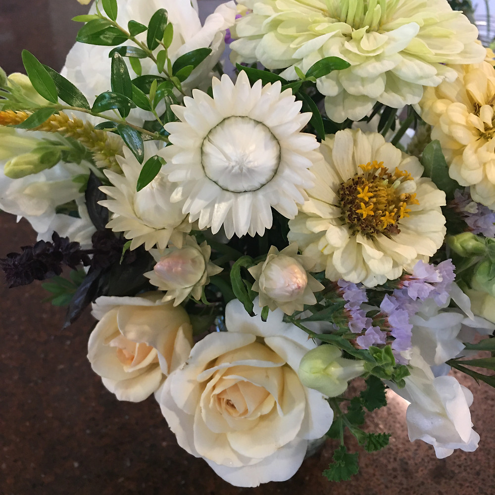 Strawflower 'Vintage White' and statice 'Seeker Blue' in a bouquet with roses and zinnias.