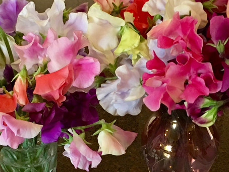 Sweet Peas, Part 1