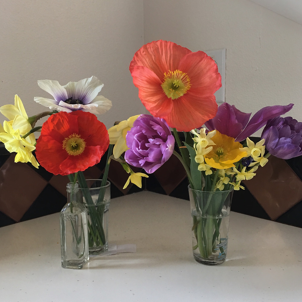 poppies and tulips