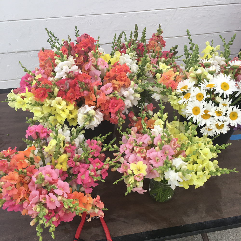 flowers, snapdragons