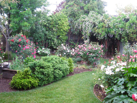Color Combinations in the Garden