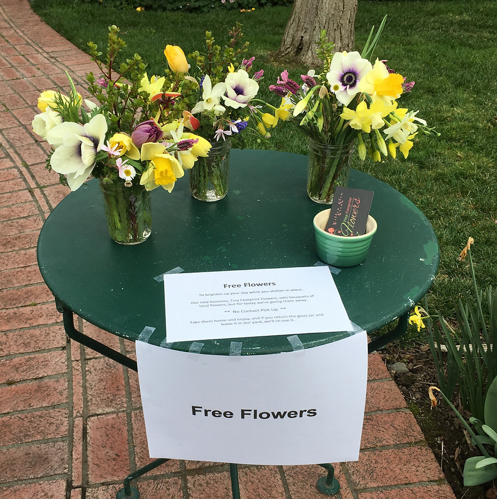 Free flowers during Covid  Daffodil