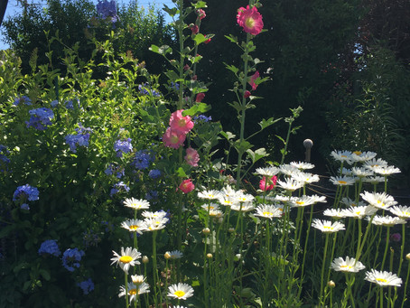 From Gardening to Flower Farming