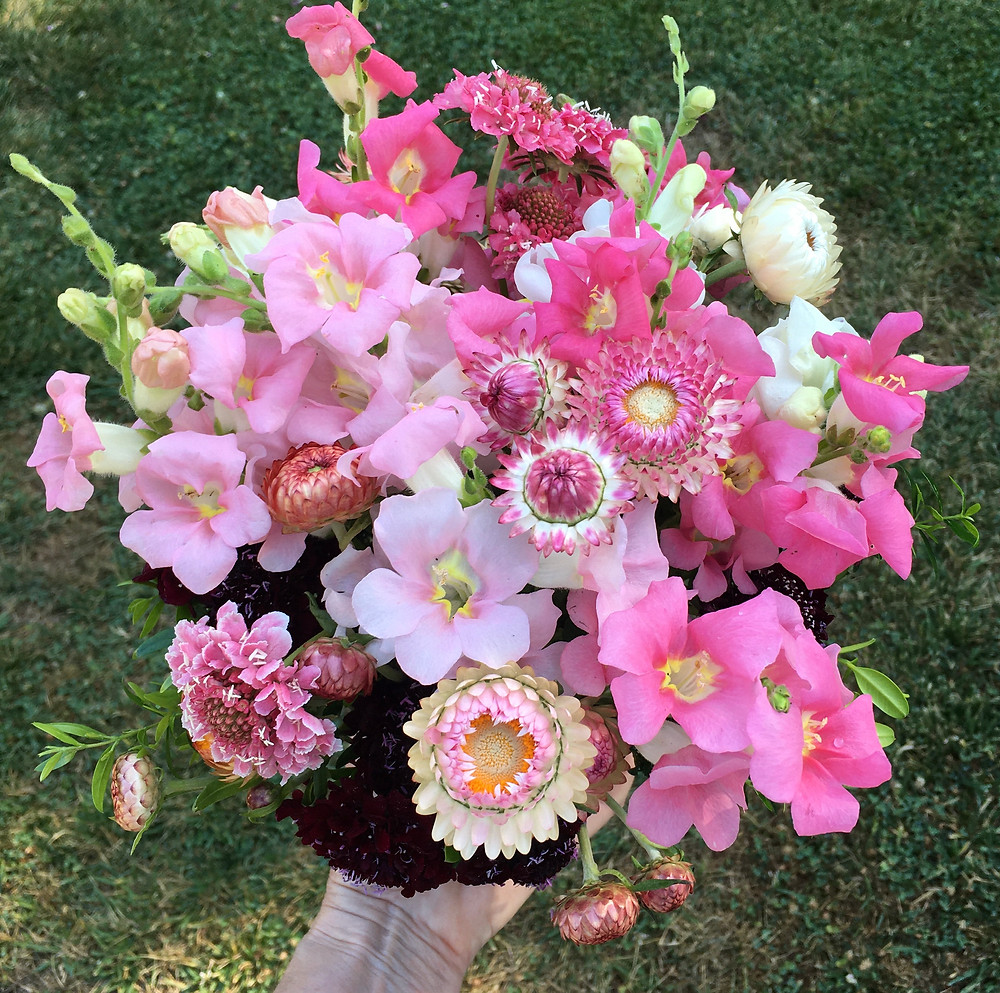 Strawflower 'Candy Pink' in a bouquet