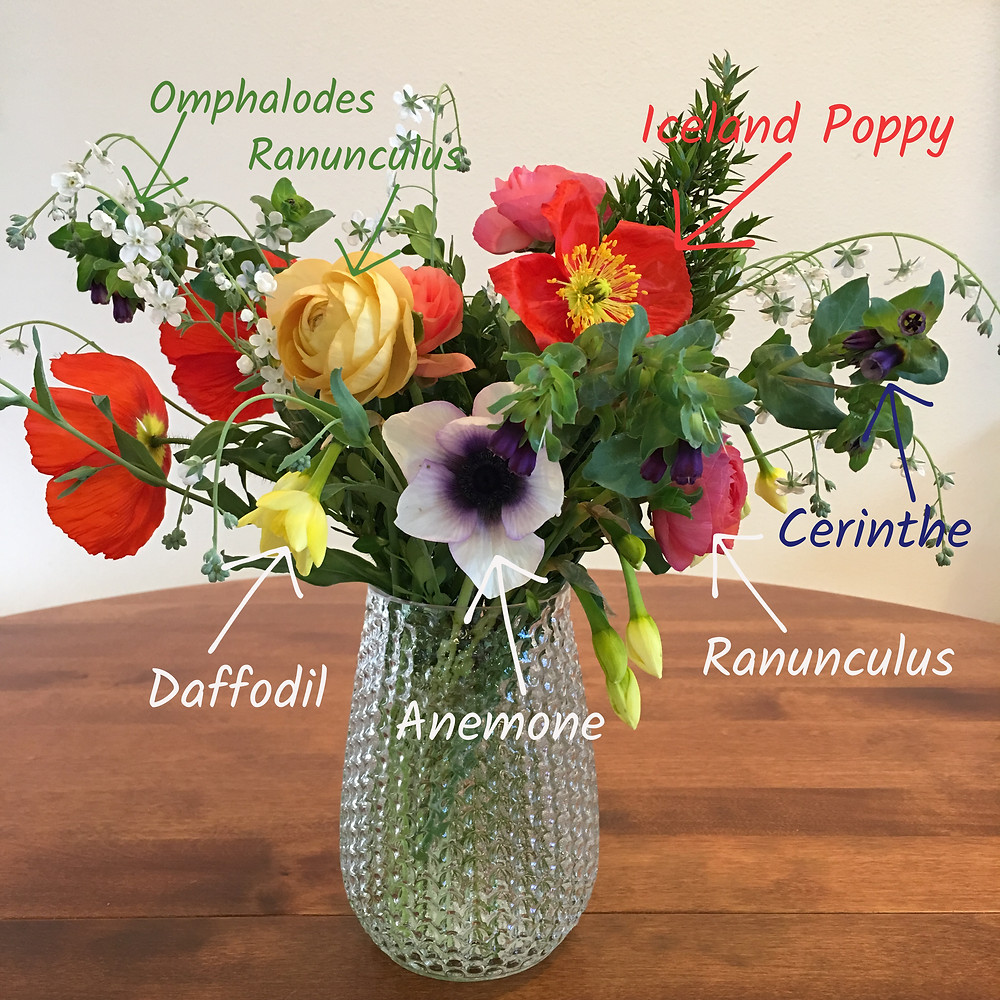 Omphalodes and daffodils in a mixed bouquet