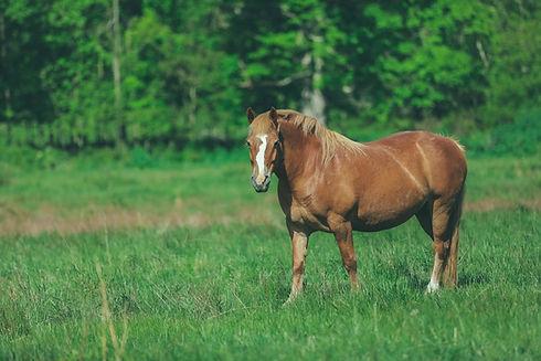 FB Over-weight horse.jpg