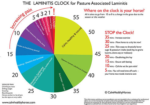 lammygraph2021.jpg