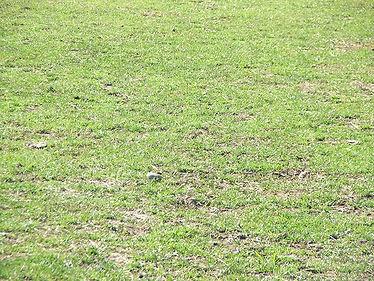 P-Dangerous-Grass.jpg