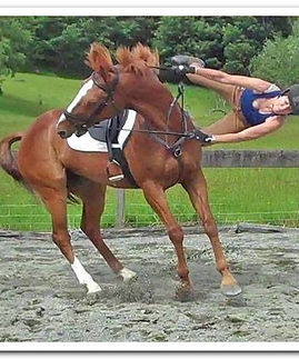 horse riding accident
