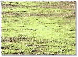 Dangerous Grass.jpg