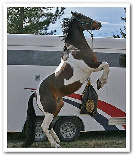 Lucerne affected horse reacting