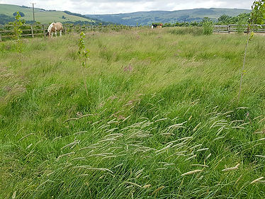 Mixed-Grasses-UK.jpg
