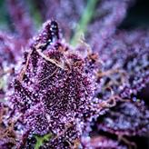 purple up close.png