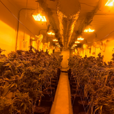 new grow room.png