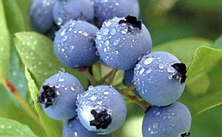 Blueberry Salsa - 18 oz Jar