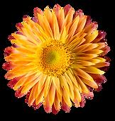 flower03-min.png