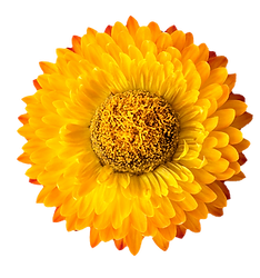 flower07-min2.png