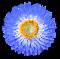 flower05-min2.png